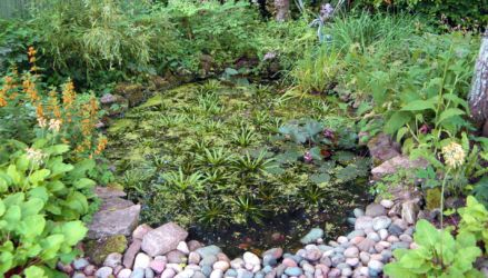 Enchanted Garden pond